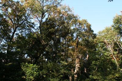 自然教育園の森の「ギャップ」