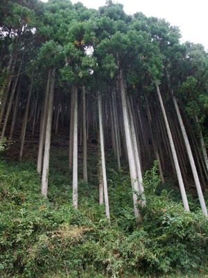 西粟倉村の森