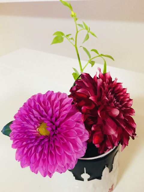 お花の魅力